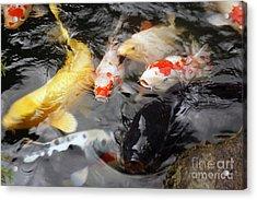 Acrylic Print featuring the photograph Matsue Koi by Cassandra Buckley