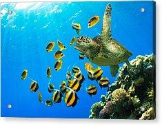 Maui Cruzer Acrylic Print by James Roemmling