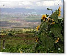 Maui Northwest View Acrylic Print
