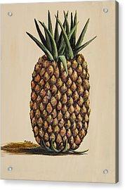 Maui Pineapple 3 Acrylic Print by Darice Machel McGuire