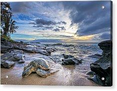 Maui Sea Turtle Acrylic Print