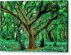 Maui Tree Acrylic Print