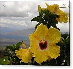 Maui Yellow Hibiscus Acrylic Print