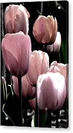 Mauve In The Morning Acrylic Print