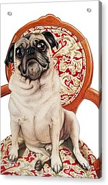 Acrylic Print featuring the drawing Max by Danielle R T Haney