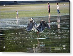 May Day Waders Acrylic Print by Gayle Swigart