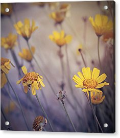 May Daze Acrylic Print
