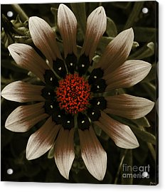 Acrylic Print featuring the photograph May May  by Janice Westerberg