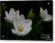 May Flowers Acrylic Print by Tannis  Baldwin