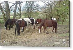 May Hill Ponies 3 Acrylic Print