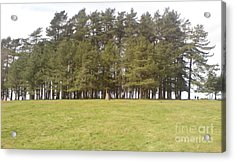 May Hill Tree Tops Acrylic Print