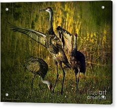 May I Have This Dance Acrylic Print by Lianne Schneider