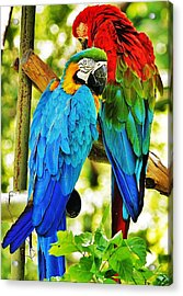 Acrylic Print featuring the photograph Mccaws by Al Fritz