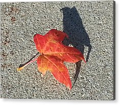 Acrylic Print featuring the photograph Me And My Shadow by Caryl J Bohn