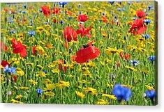 Meadow Flora Acrylic Print