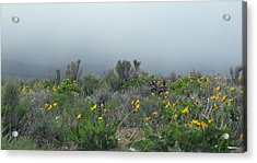 Meadow Fog Acrylic Print by Jennifer Muller