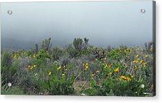 Meadow Fog Acrylic Print