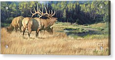 Meadow Music Acrylic Print by Rob Corsetti