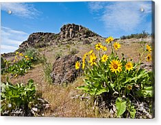 Acrylic Print featuring the photograph Meadow Of Arrowleaf Balsamroot by Jeff Goulden