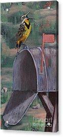 Meadow Soloist II Acrylic Print