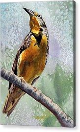 Meadowlark Acrylic Print by Anne Gifford