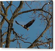 Meal In Flight Acrylic Print
