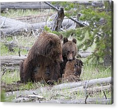 Mealtime Acrylic Print by Gerry Sibell