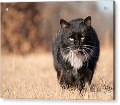 Mean Looking Softie Acrylic Print