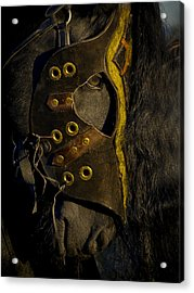 Medieval Stallion Acrylic Print by Wes and Dotty Weber