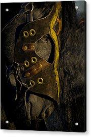 Medieval Stallion Acrylic Print