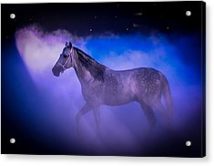 Medieval Times Tournament Horse Acrylic Print by Gene Sherrill