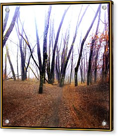 Acrylic Print featuring the photograph Meditation On Fear by Wayne King