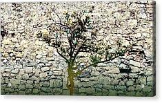 Mediterranean Garden With An Old Wall Acrylic Print