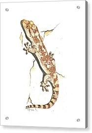 Mediterranean House Gecko Acrylic Print