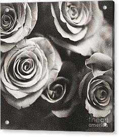 Medium Format Analog Black And White Photo Of White Rose Flowers Acrylic Print by Edward Olive