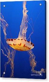 Medusa Jelly Acrylic Print by Christiane Schulze Art And Photography