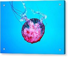 Medusa Acrylic Print by Valentino Visentini