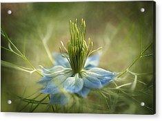 Medussa Acrylic Print by Faith Simbeck