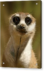 Meerkat Guardian Acrylic Print
