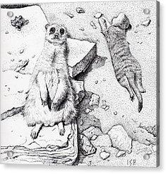 Meerkats Acrylic Print by Inger Hutton