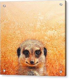 Meerkat's Smile Acrylic Print by Elena Kolotusha