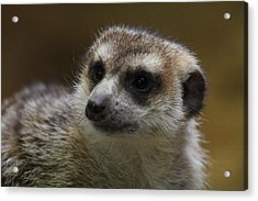 Meerket - National Zoo - 01136 Acrylic Print by DC Photographer
