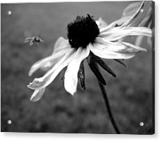 Meet In The Middle Acrylic Print by Gilbert Photography And Art