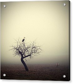 Meeting In The Morning Acrylic Print by Holger Droste