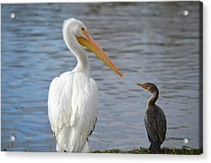 Meeting Of Beaks Acrylic Print