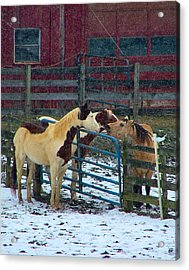 Meeting Of The Equine Minds Acrylic Print by Julie Dant