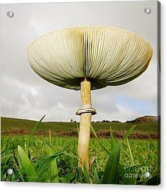 Mega Mushroom Iv Acrylic Print
