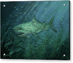 Megadolon Shark Acrylic Print by Tom Shropshire
