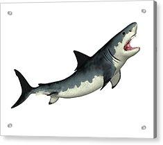 Megalodon Prehistoric Shark Acrylic Print
