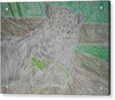 Melanistic Jaguar Drawing On Paper Acrylic Print by William Sahir House